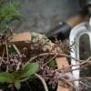 ガーデン雑貨14